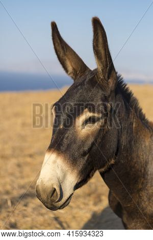 Close Up From A Mule's Head