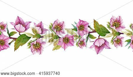 Hellebore Flower Seamless Border. Spring Pink Flowers In The Full Bloom With Green Leaves Seamless D