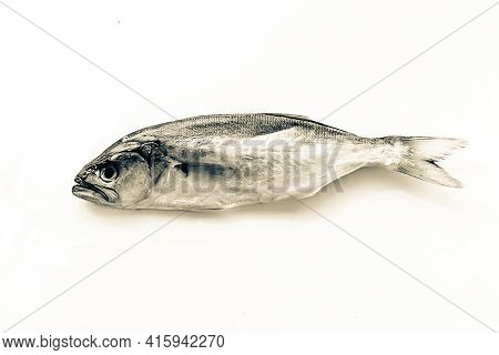 Dried Blue Fish Pomatomus Saltatrix, Isolate On A White Background. Top View.