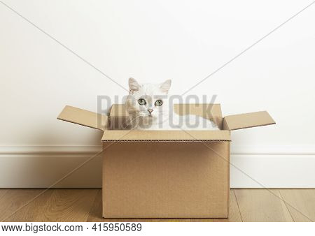 Cat In A Box. A Funny Cat Sits In A Cardboard Paper Box Against The Background Of A White Empty Wall