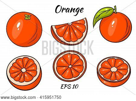 Orange Vector. Fresh Tropical Orang Fruit In Cartoon Style. Half And Ring Vector Orange Slice Isolat