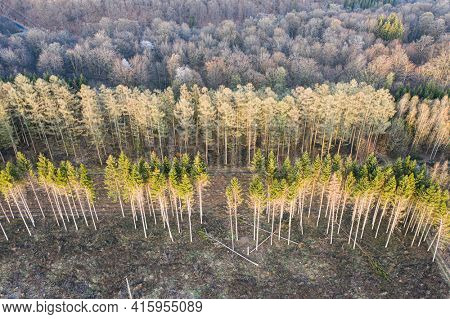 Aerial view of forest management work, Ardennes, Belgium. Deciduous tree forest and or against spruce forest.