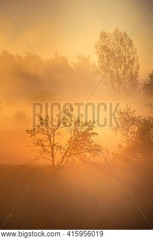 A Beautiful Diffused Light During The Spring Sunrise. Trees In Spring With Warm Sun Light In Morning