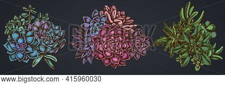 Flower Bouquet Of Colored Succulent Echeveria, Succulent Echeveria, Succulent Stock Illustration