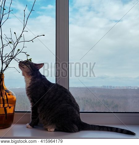 The Cat Sniffs The Spring Flower And The Winter Forest Outside The Window. Pet Waiting For Spring