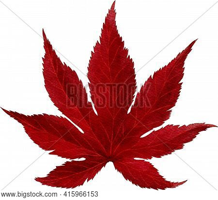 Red Autumn Maple Leave Watercolor Painting Png