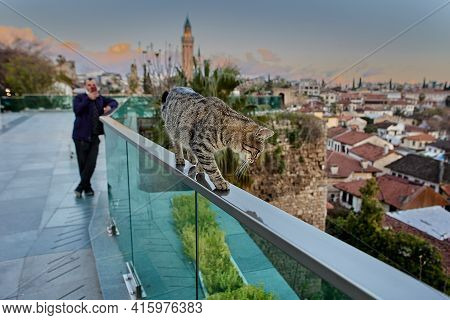 Antalya, Turkey - March 19, 2021: An Observation Deck Overlooking Old City, Man Watches Stray Cat Wh