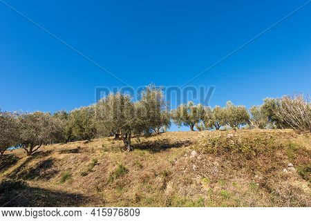 Terraced Field With Olive Grove On The Coastline Of The Lake Garda (lago Di Garda) With Clear Blue S