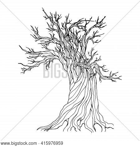 Contour Illustration With An Old Rotten Oak Isolated On A White Background. Vector Illustration, Eas