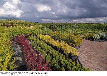 Garden Shop For The Sale Of Plants. Here You Can Buy A Lot Of Varieties Of Green Plants: Various Flo
