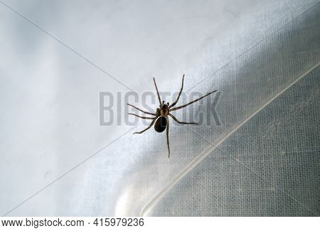 A Macro Photograph Of A Brown Recluse Spider Inside A Plastic Tub. Might Be Time To Call A Professio