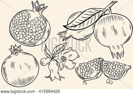 Sketch Of A Pomegranate. A Set Of Whole Fruits, Half Fruits With Berries. Branch With Fruits And Flo