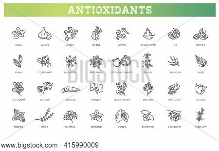 Antioxidant Food, Herbs. Healthy Lifestyle. Vector Collection