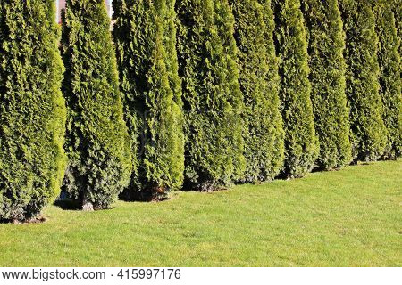 Neat Hedge In The Park Area Of The City