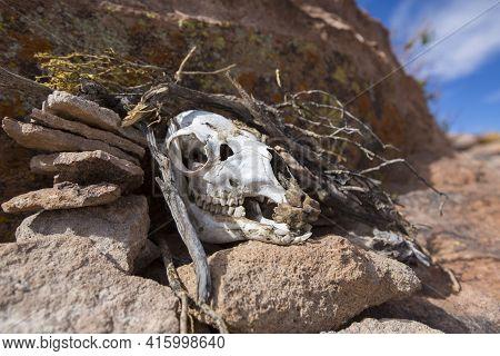 Atacama Desert, Bolivia, December 31: Detail Of Rock Formation And Cow Skull, Part Of The Skeleton S