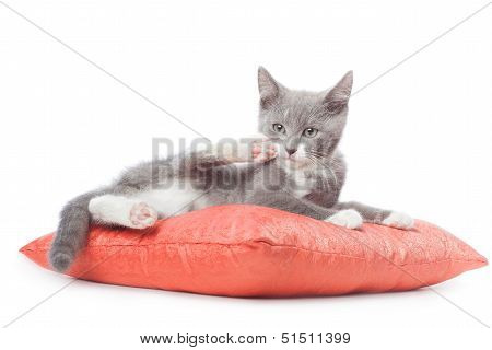 Kitten is laying on pillow. Isolated on white background poster