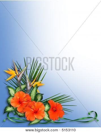 Tropical Flowers Border Hibiscus