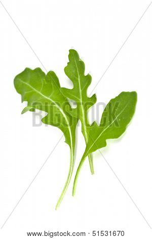 fresh rucola leaves isolated on white background