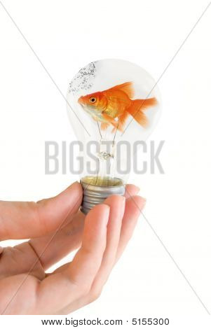 hand holding a light bulb with swimming fish isolated on white background poster