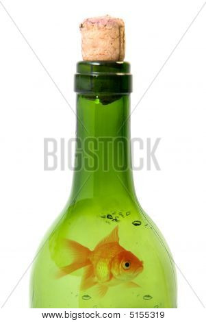 Bottle Of Wine And Goldfish