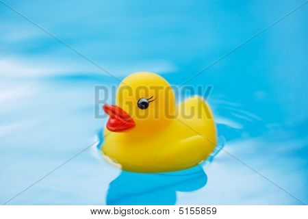 Toy Duck Swimimng