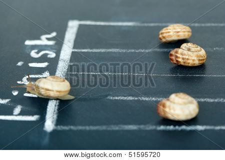 Racing snails close-up
