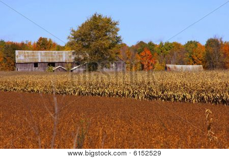 old barn on a farmland in an autumn scenery poster