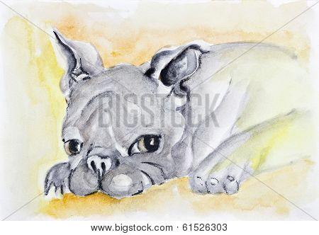 Sad Lonely Pet