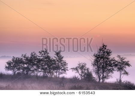 Foggy Landscape at Dawn