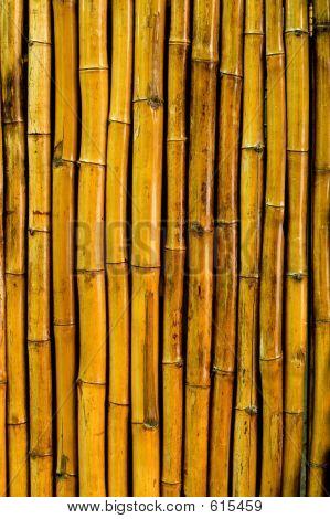 Bamboo Pattern