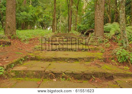 Stair ways full of moss In The deep mountains