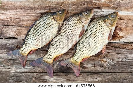 Carp fish over old wooden plank board