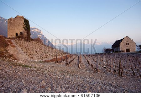 Vineyards And Stone Tower At Sunset In France