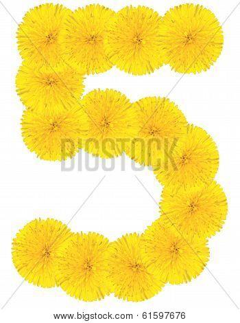 Number 5 Made From Dandelion Flower