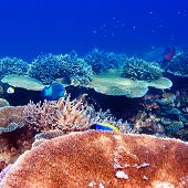 Coral reef at South Ari Atoll, Maldives poster