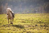 Beautiful, saddled horse galloping towards you poster