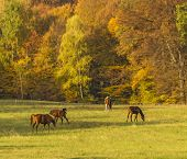 group of horses grazing and playing in the background of autumn forest at golden hour stylized and filtered to look like an oil painting poster
