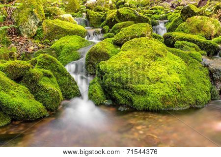 Small Forest Stream Near Third Vault Falls