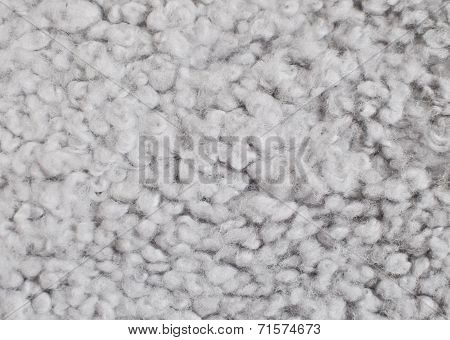 Gray wool background. Sheep skin closeup in a full frame. poster