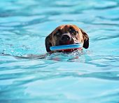 a dog having fun at a local public swimming pool  poster