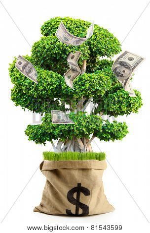Money tree in bag with dollar sign isolated on white