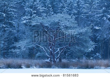 Cold Winter Snowy Morning In Forest