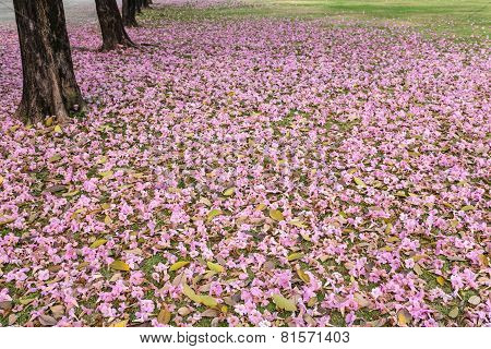 Pink flowers and fall under the trees