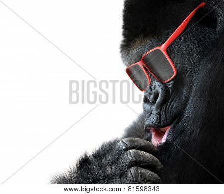 Unusual animal fashion; closeup of gorilla face with red sunglasses