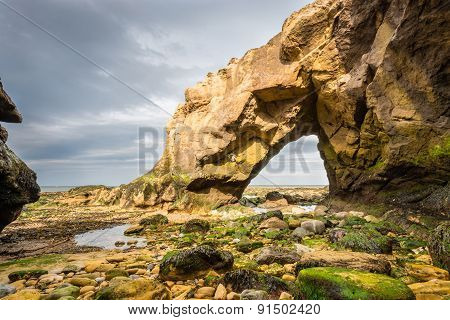 Saddle Rocks at Cullercoats Whitley Bay here at low tide showing the seaweed and rocks poster