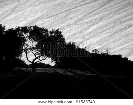 Sketch of a tree silhouette