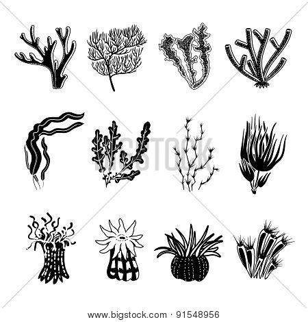 Coral Black Set