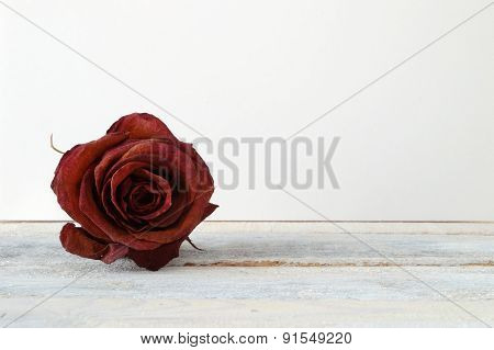 Withered red rose flower on a white wooden shelf.