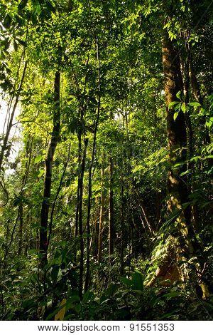 Beautiful green landscape in the amazon rainforest, Yasuni National Park, Ecuador
