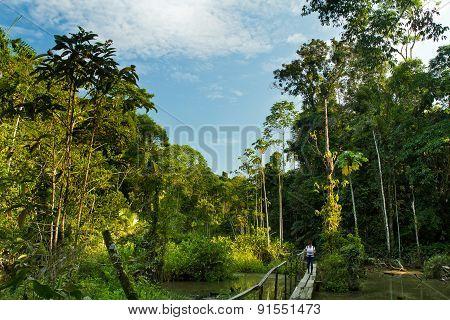 Unidentified tourist walking through the amazon rainforest, Yasuni National Park, Ecuador